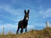 donkey-2