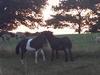 donkey-and-pony-2